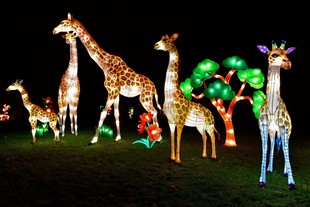 China Light-Festival at Cologne Zoo