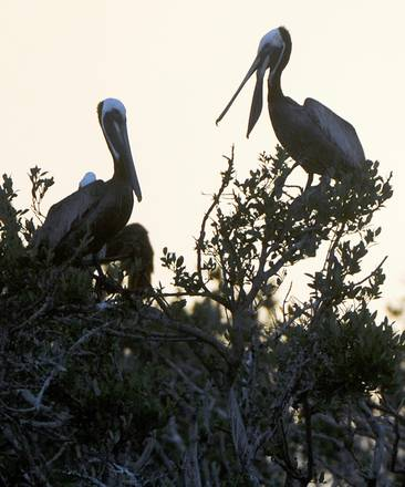 Migrant birds targeted in Cyprus