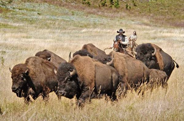 In South Dakota per il Buffalo RoundUp a settembre (Foto: South Dakota Department of Tourism)