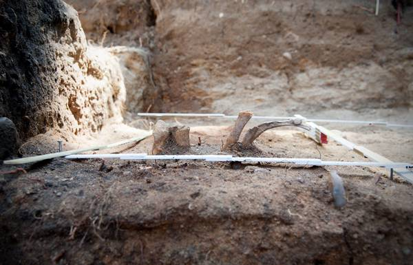 Archaeological excavation in a Stone Age burial (archive)
