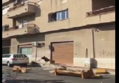 Immagine tratta dal video di Vozza 'Noi con Salvini' (ANSA)