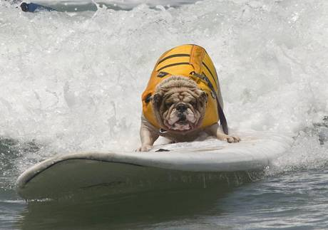 Seventh Annual Loews Coronado Bay Resort Surf Dog Competition [ARCHIVE MATERIAL 20120616 ]